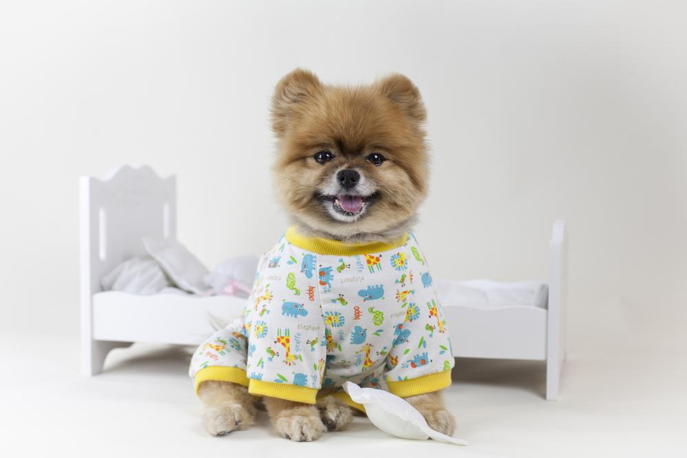 tenue de jeu pour chien