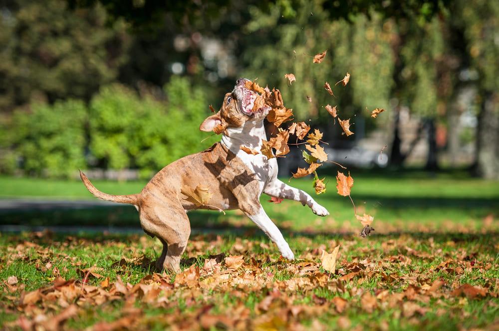 promener-son-chien-sans-laisse